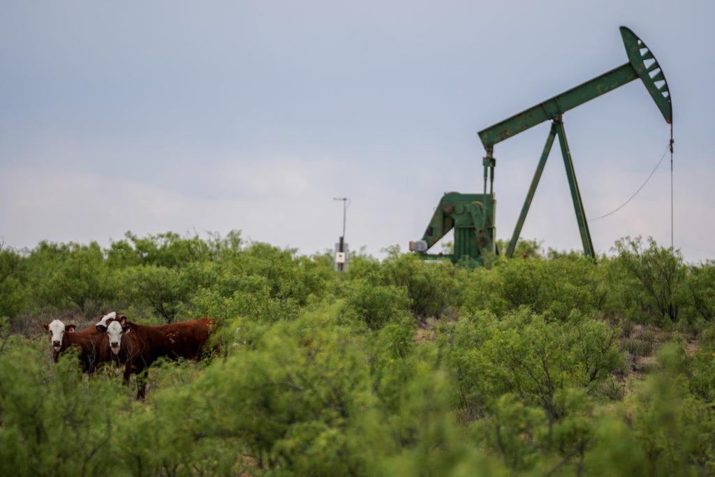 Petrolio e buoi